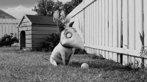 Sparky, le chien qui va ressusciter
